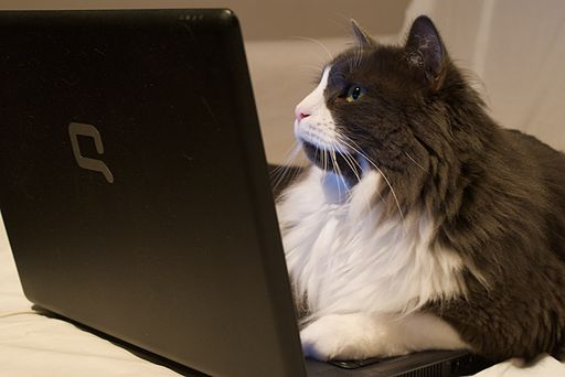 Cat on Laptop Cyber Monday Shopping