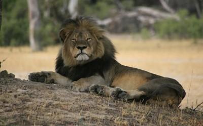 Cecil Lion Dentist Apology